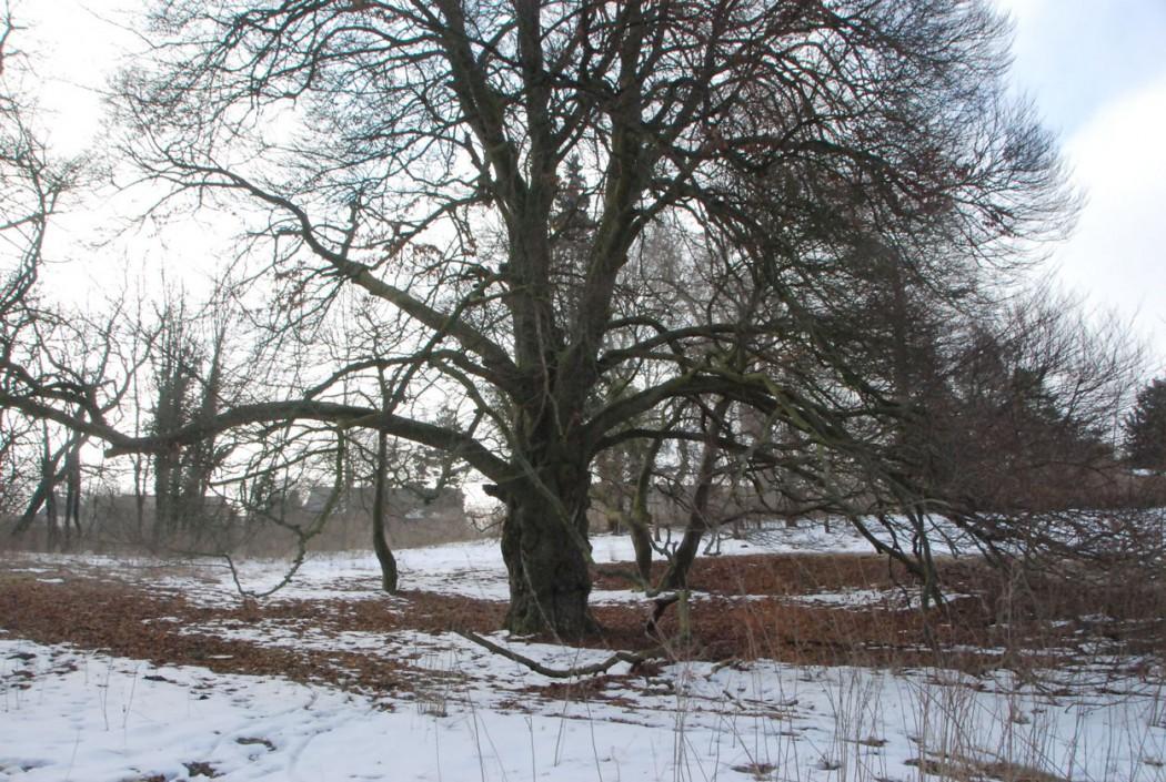 Kurzurlaub-mit-Kindern-Mecklenburg-Vorpommern-Baum-Kavaliershaus