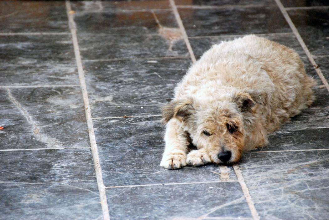 das beste hotel in chania entdeckt und einen hund am hafen