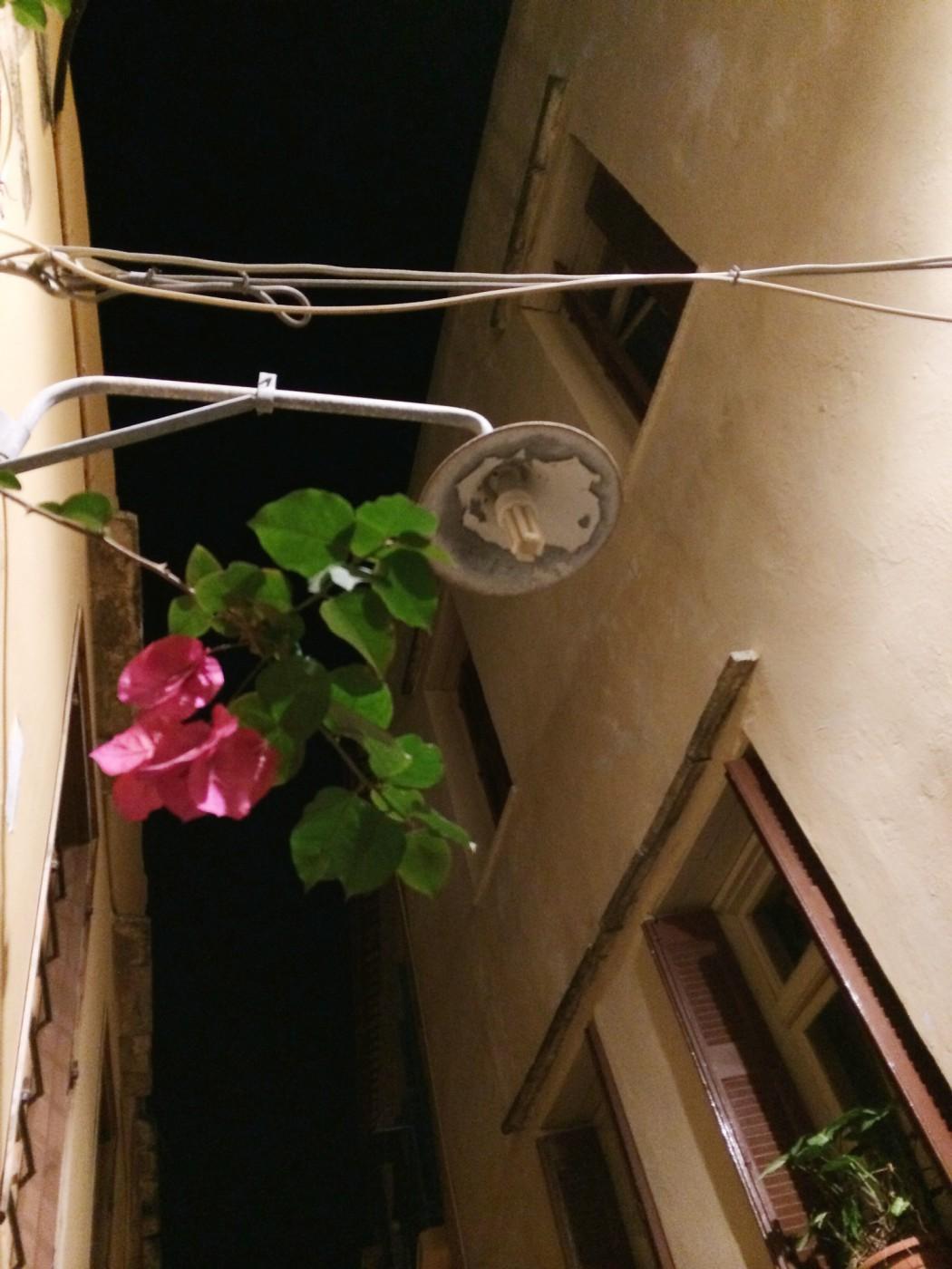 das beste hotel in chania entdeckt und eine blume der nacht