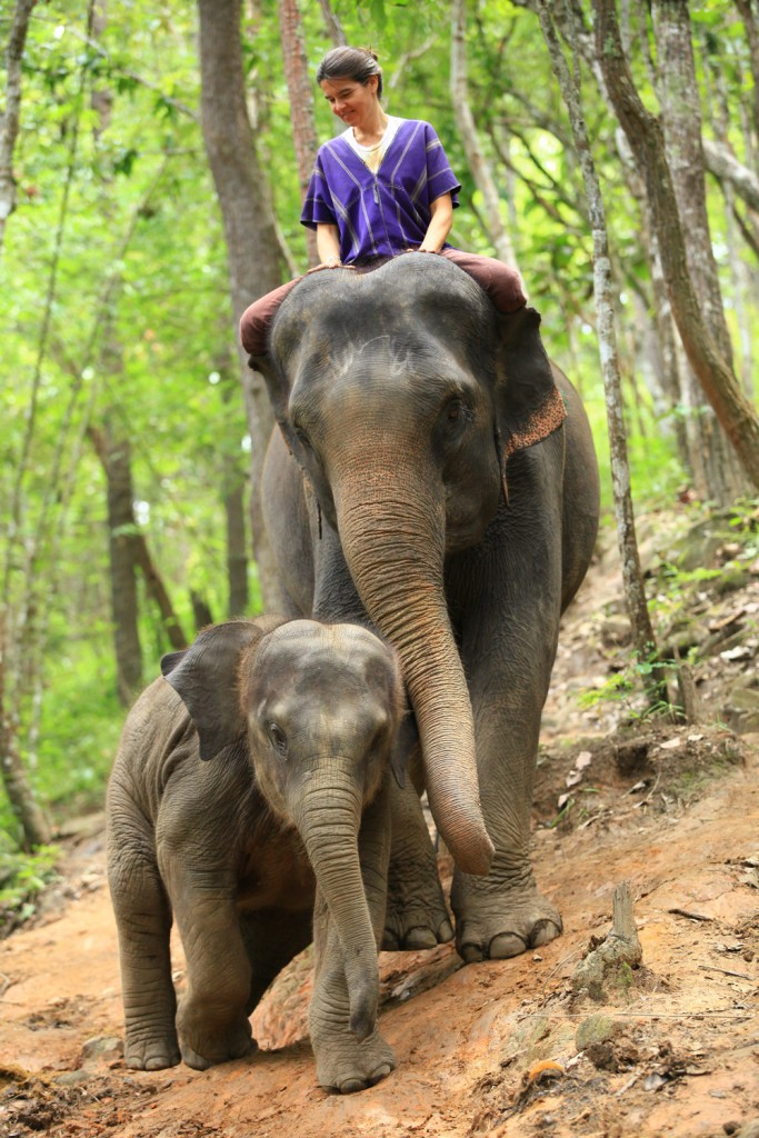 Elefantencamp-in-chiang-mai-patara-elefant-farm-smart-family-trave_7603