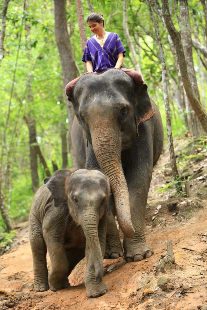 Elefantencamp-in-chiang-mai-patara-elefant-farm-smart-family-trave_7603