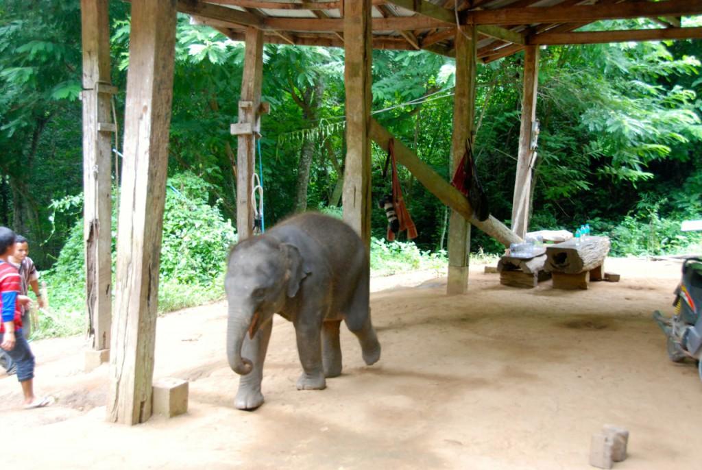 Elefantencamp-in-chiang-mai-patara-elefant-farm-smart-family-travel_3176