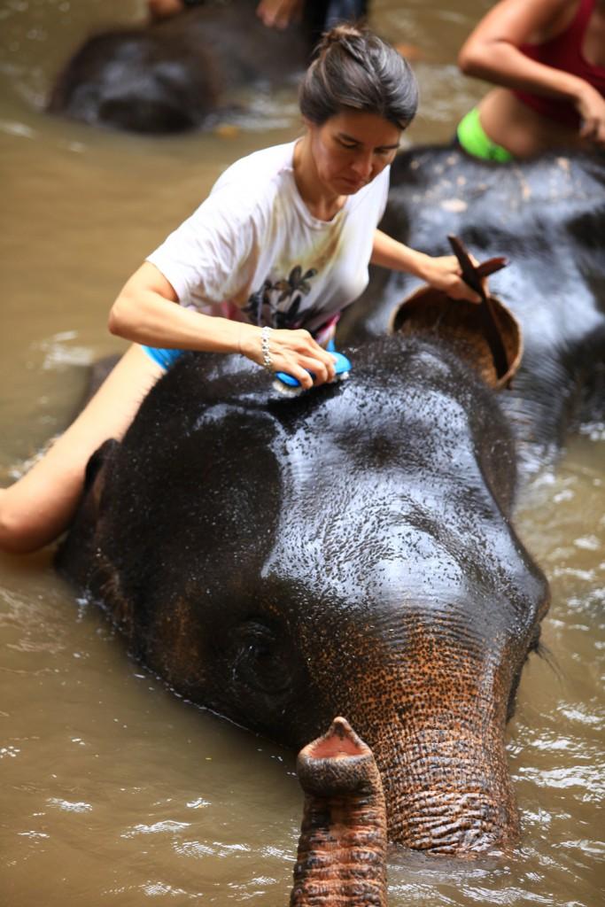 Elefantencamp-in-chiang-mai-patara-elefant-farm-smart-family-trave_7641