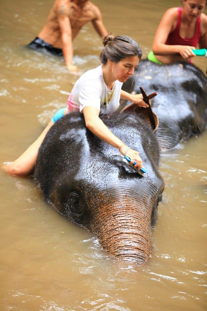 Elefantencamp-in-chiang-mai-patara-elefant-farm-smart-family-trave_7642
