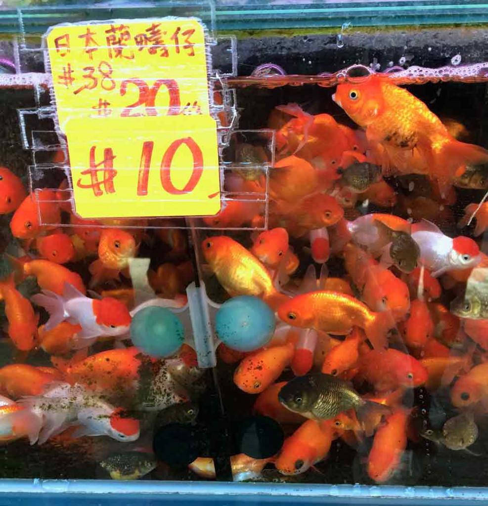 goldfischmarkt-hongkong-©looping-magazin