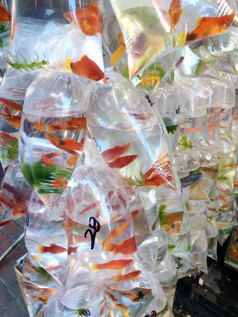 goldfische-im-beutel-hongkog-©looping-magazin