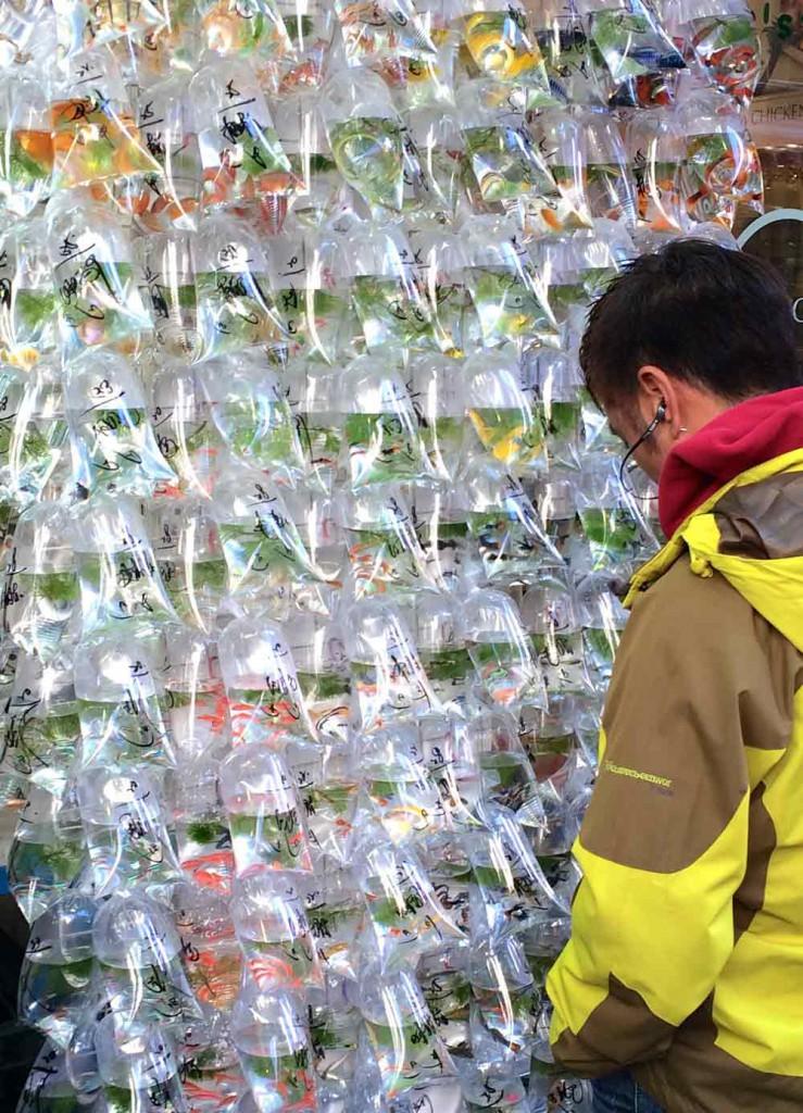 beutel-mit-fischen-hongkong-goldfichmarkt©looping-magazin