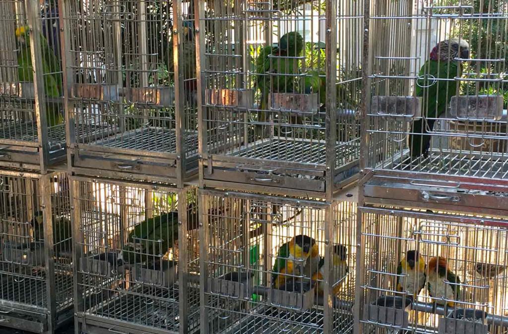 Papagaien-vogelmarkt-hongkong-©looping-magazin