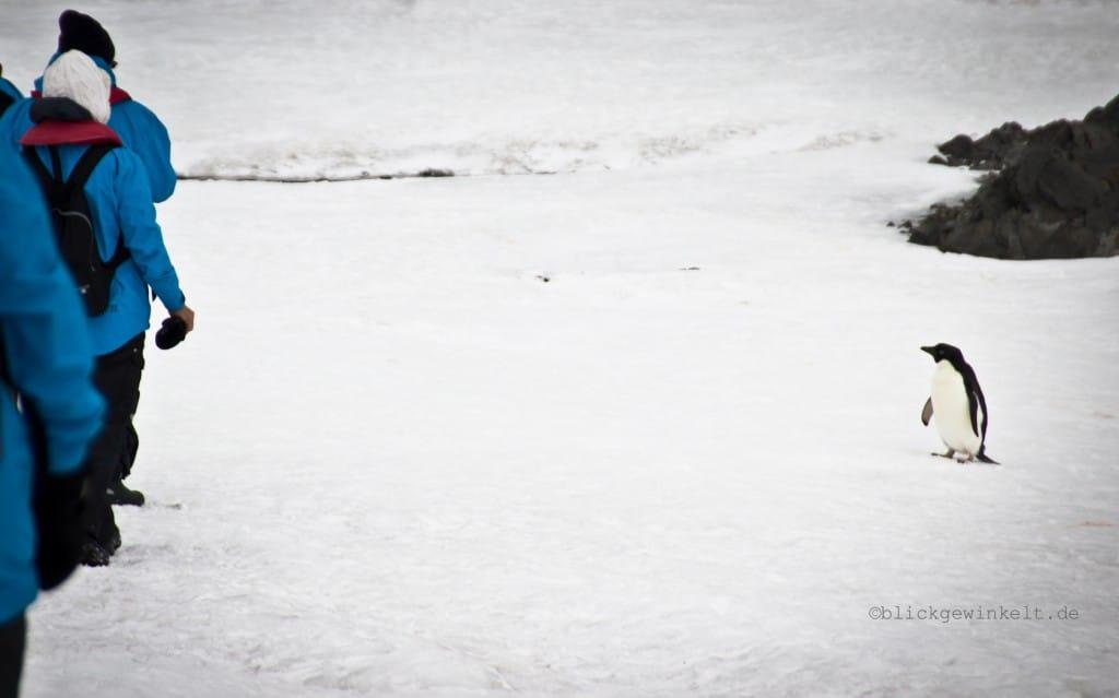 Inka-Chall-Antarktis2