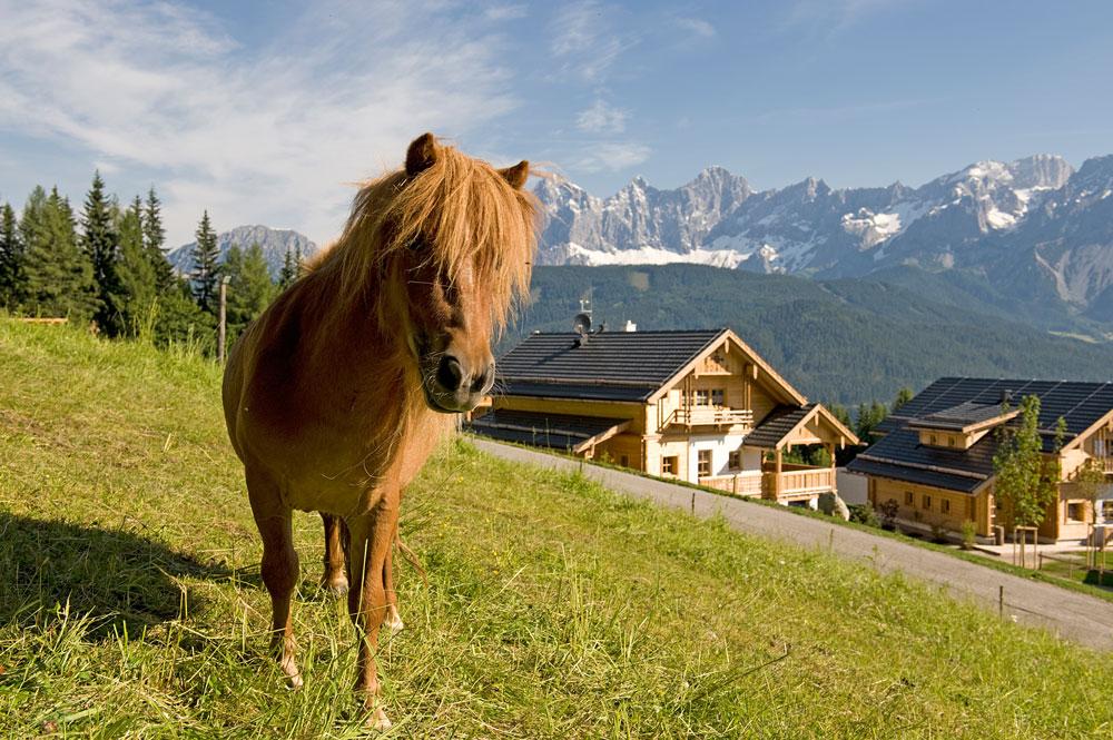 Pony_Reiteralm_DSC3323