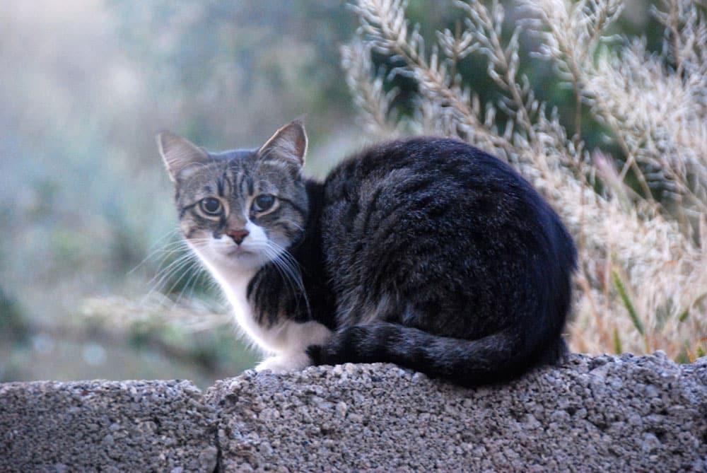 Katze in der Morgendaemmerung in Kappadokien