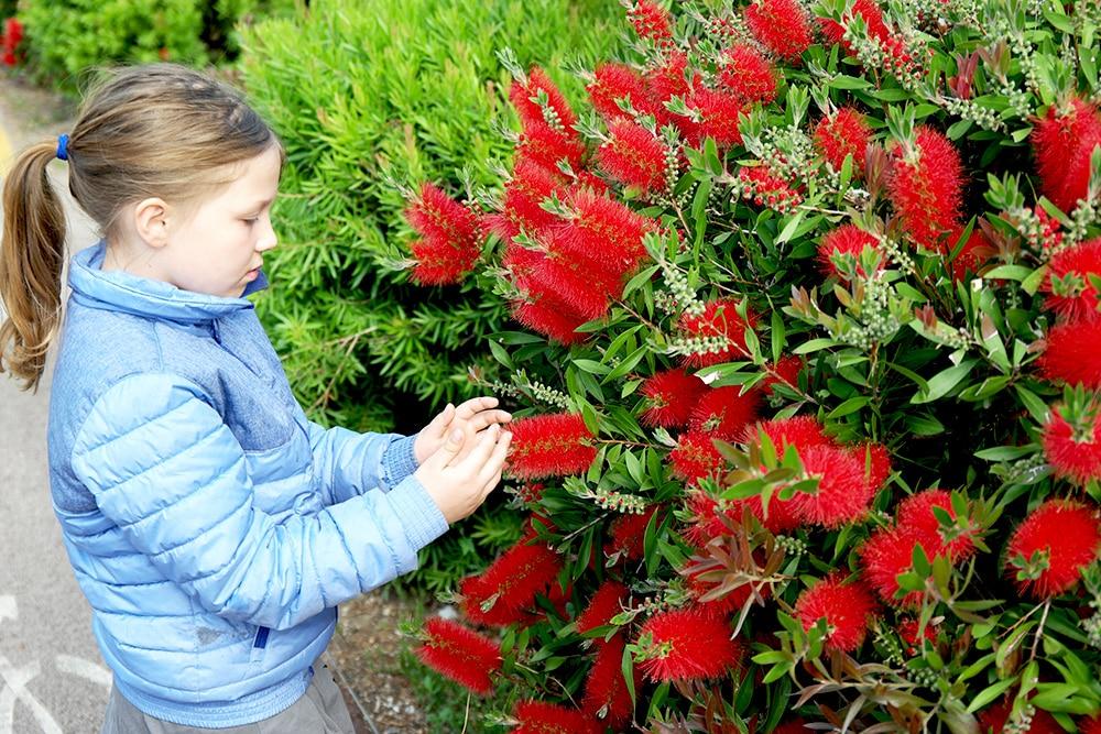Lustige Blumen am Gardasee