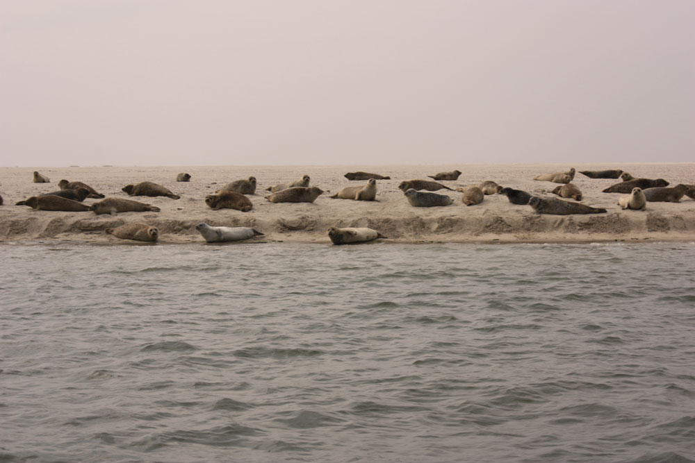 Juist Trauminsel in der Nordsee