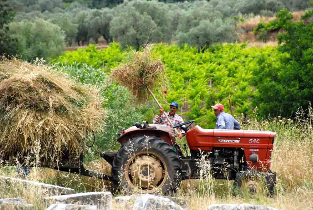Bauern-Sardes-Tuerkei