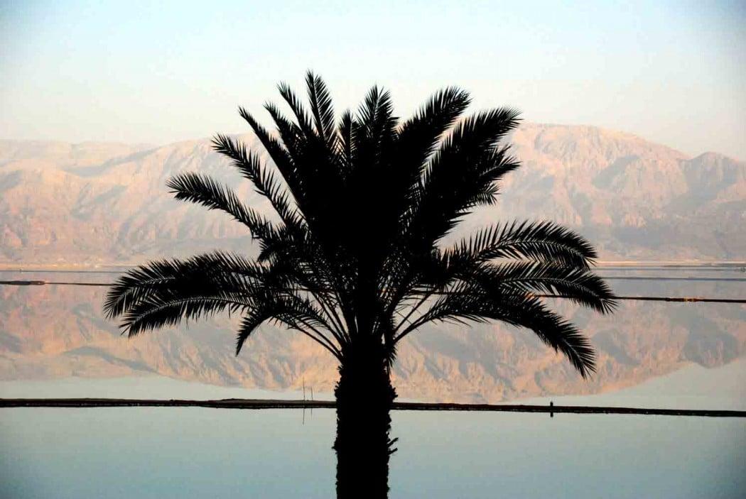 palme-am-toten-meer