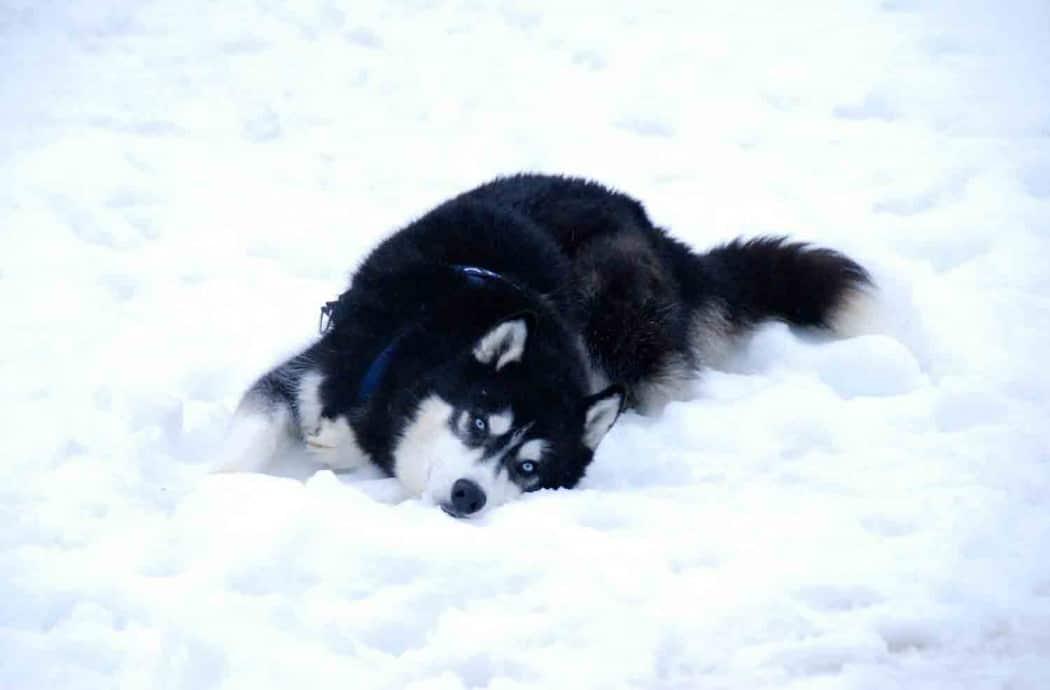 Hundeschlitten fahren in Tirol