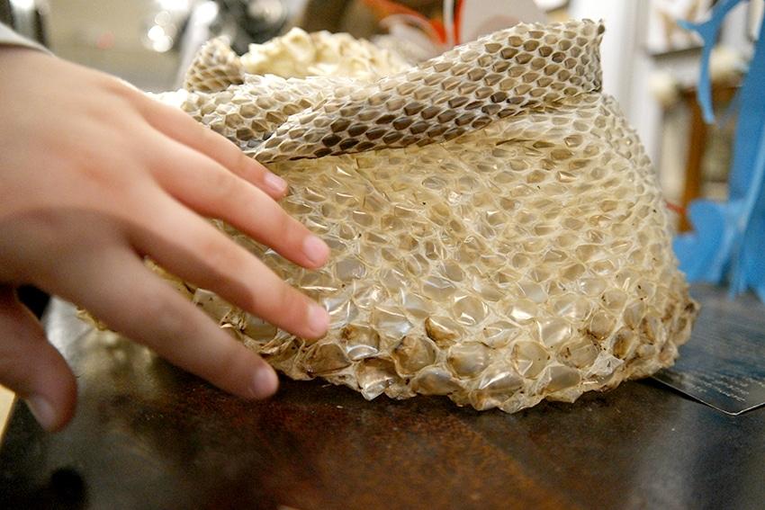 Schlangenhaut Reptiland Gardasee mit Kind auch bei Regen entdecken