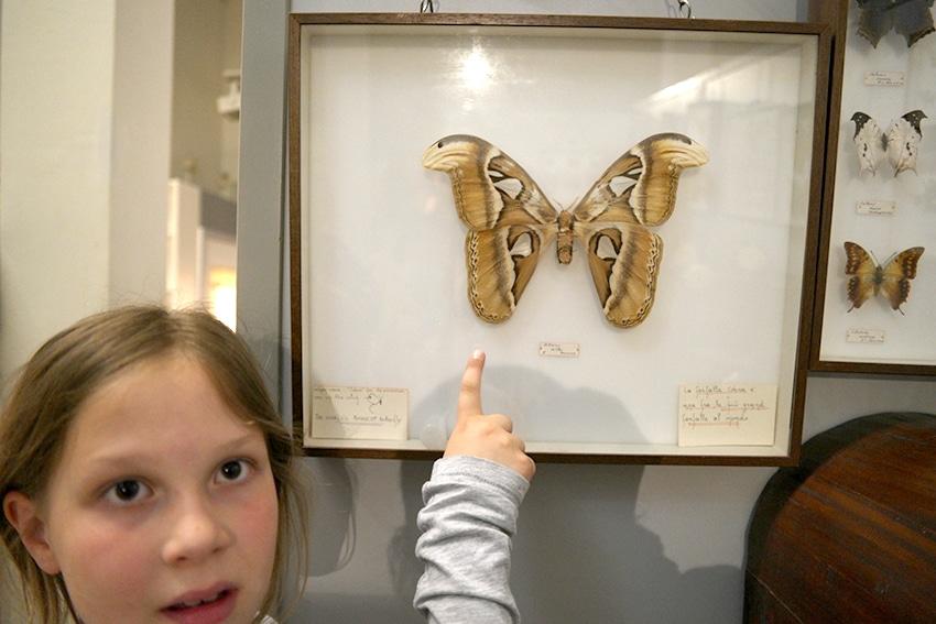 Schmetterling im Reptiland Gardasee mit Kind auch bei Regen entdecken