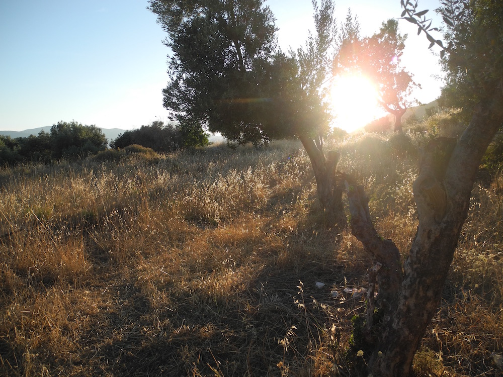 Landschaft-griechische-insel-Samos-©looping