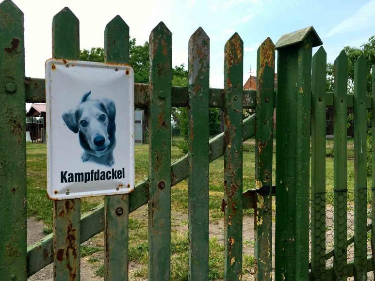 kampfdackel-Brandenburg-©looping