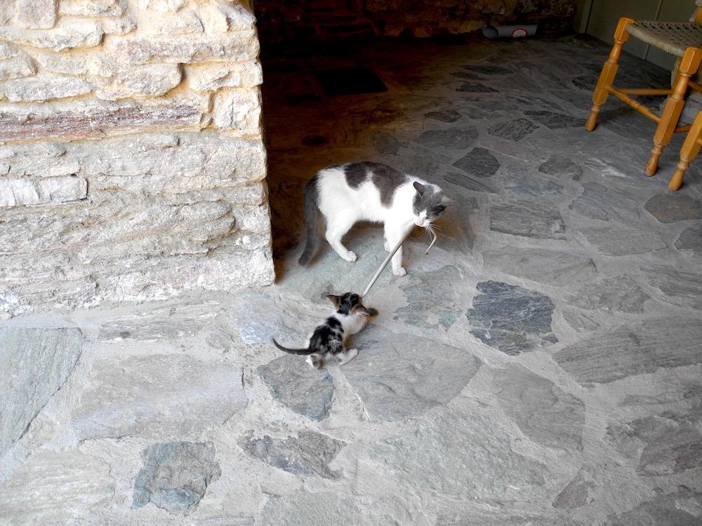 Katzen auf Samos – der wilde Norden ©looping-magazin