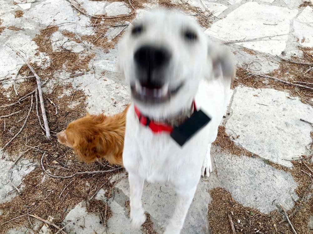 hunde-auf-zypern-©looping-magazin