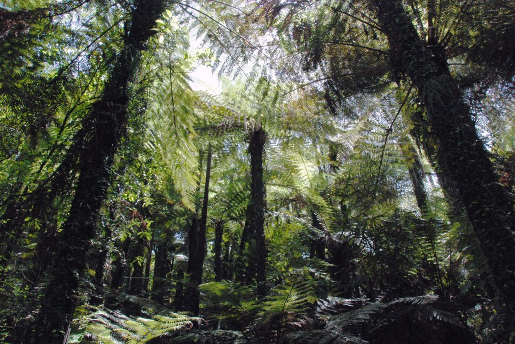 Mit Kind bis nach Neuseeland reisen