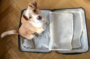Koffer oder Rucksack oder ist ein Koffer spießig?