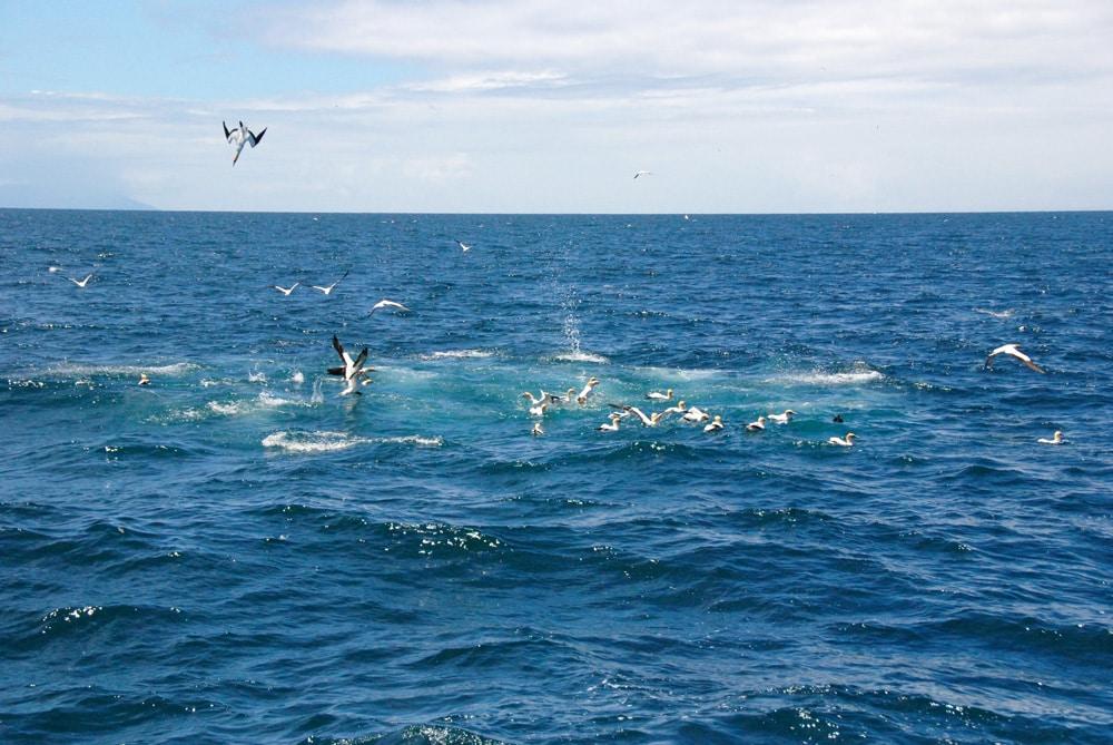 kormorane-whalewatching-auckland-loopingmagazin