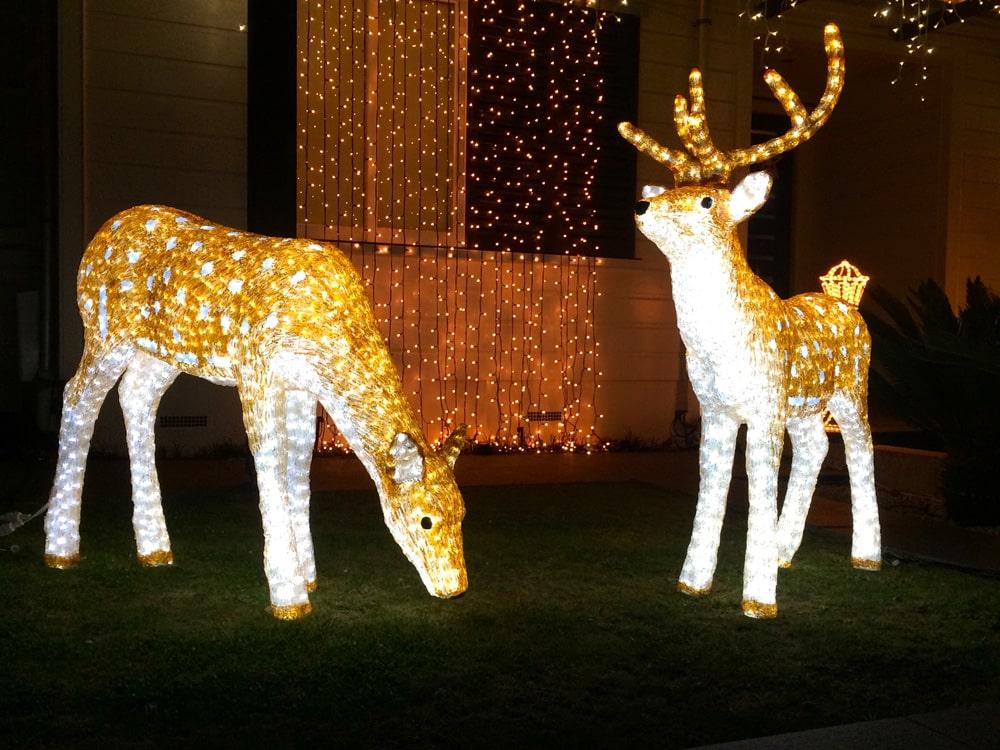rentiere-weihnachten-in-auckland-loopingmagazin