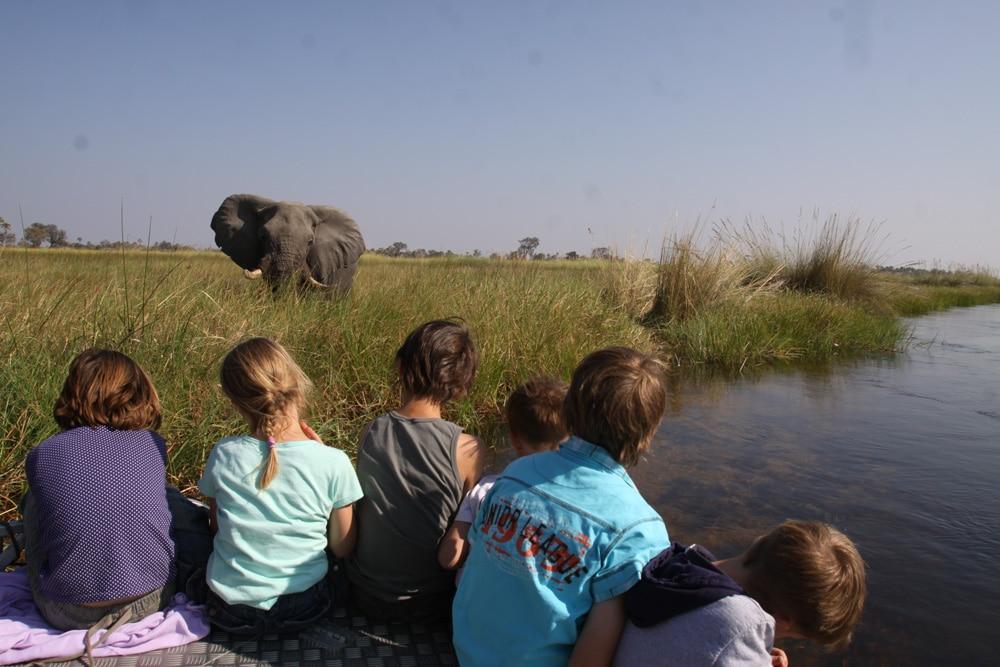 botswana-familienreise-tierbeobachtung-for-family-reisen