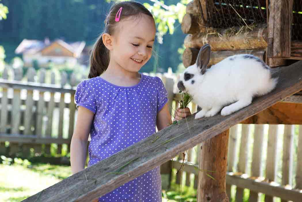 Holzlebn-Grossarl-Streichelzoo-Kaninchen