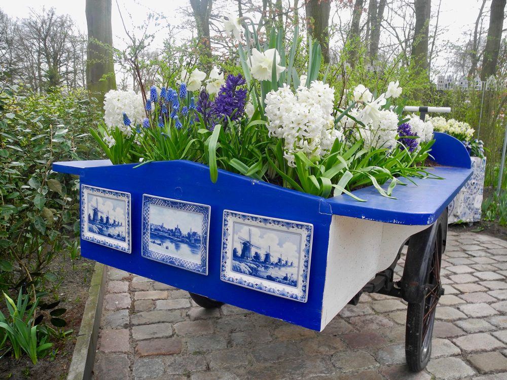 Reise in die holländische Tulpenblüte