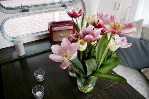 Durch die Blume. Eine Reise in die holländische Tulpenblüte