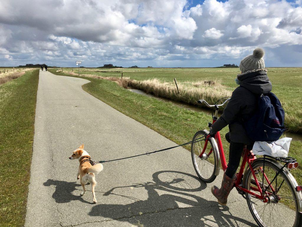 Mit Rad und Hund unterwegs auf Langeness