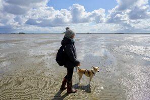 Tage im Meer. Mit Kind und Hund unterwegs auf Langeneß