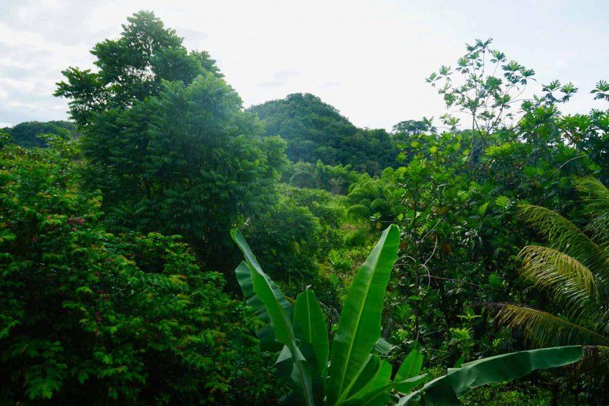 Roadtrip durch Jamaika