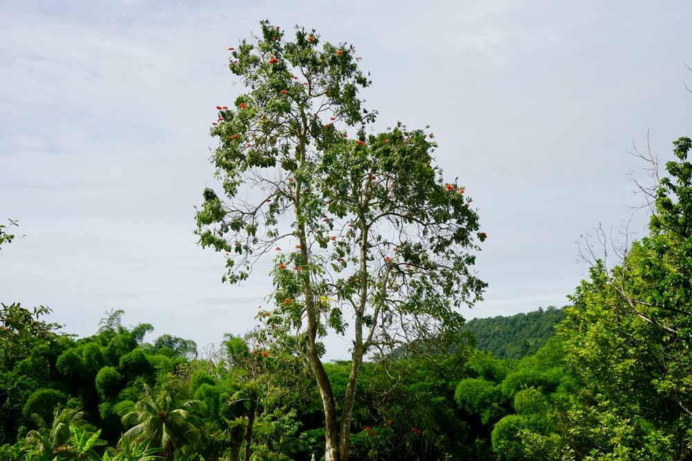 Natur auf Jamaika