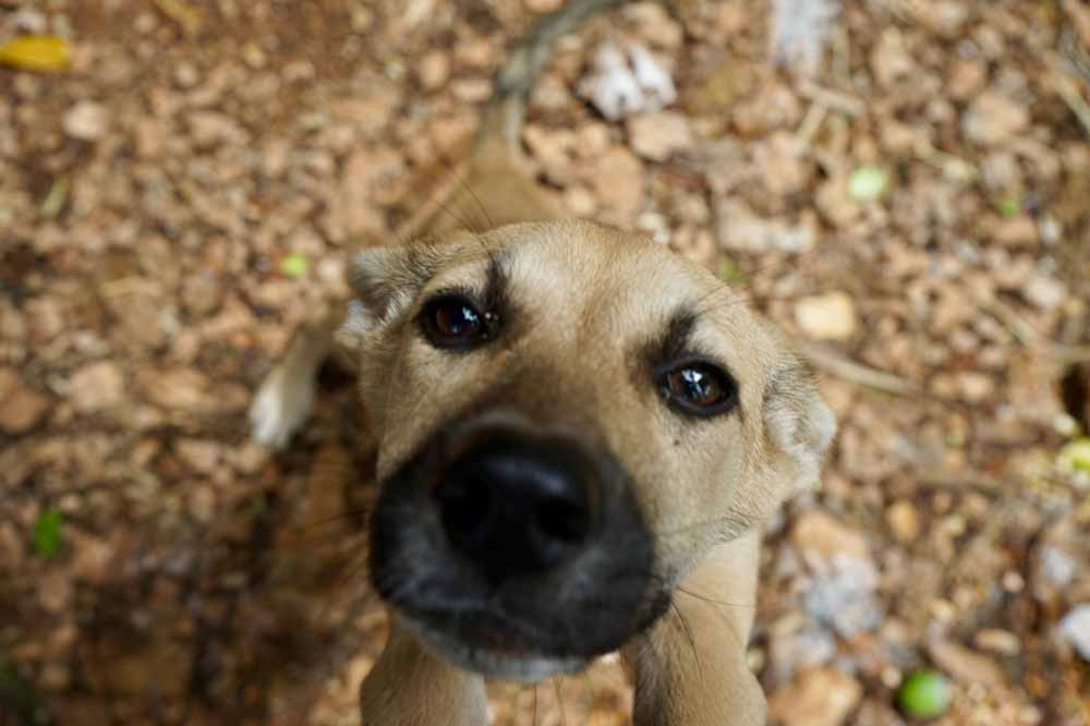 Junger Hund auf Jamaika