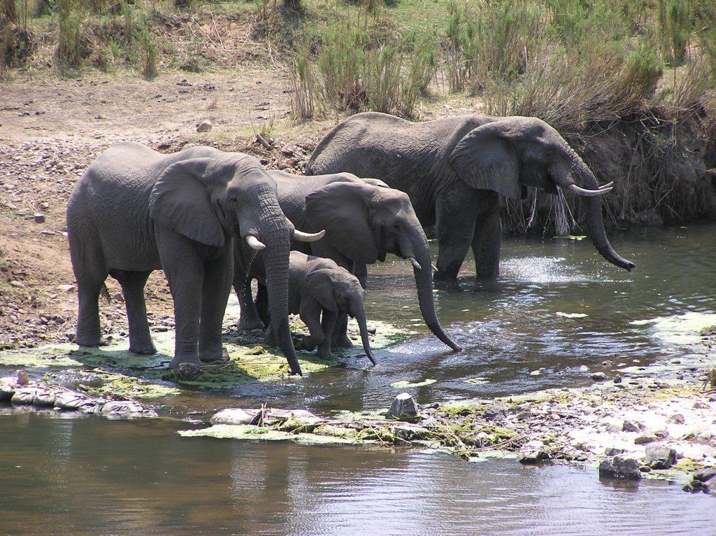 Elfanten Safari mit Kindern nach Südafrika
