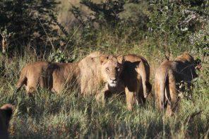 Safari mit Kindern nach Südafrika