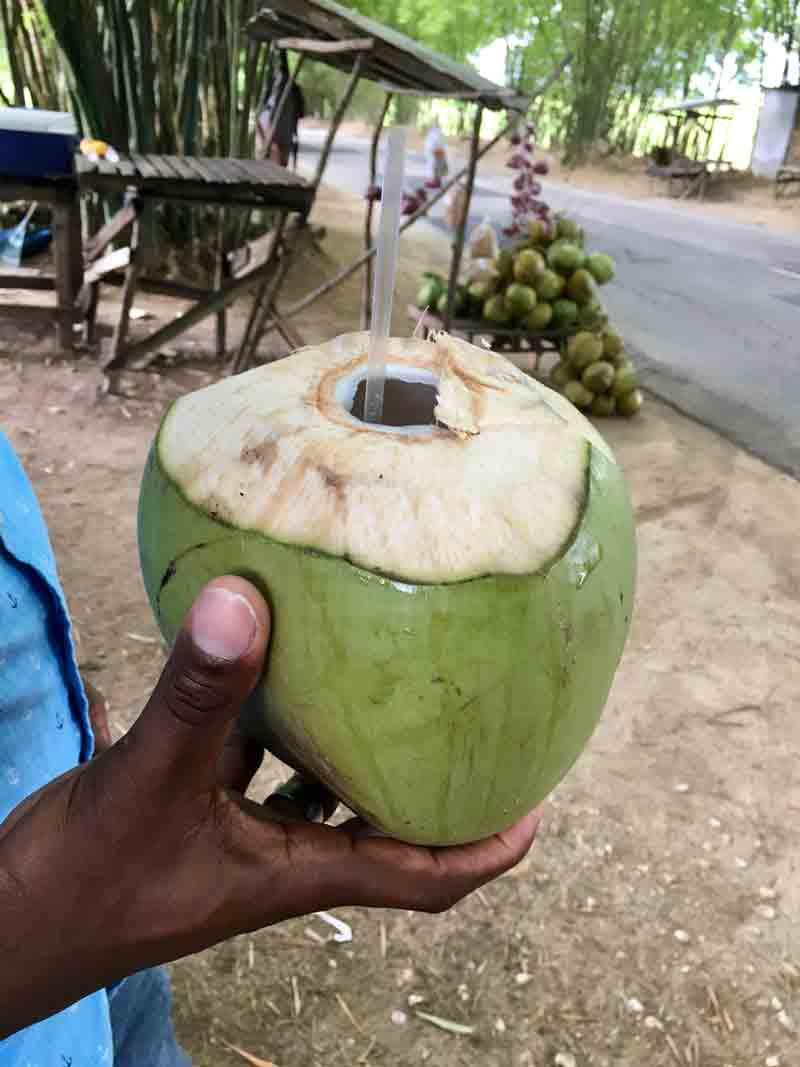Frische Kokosnuss zum Trinken auf der Rundeise auf der Jamaika