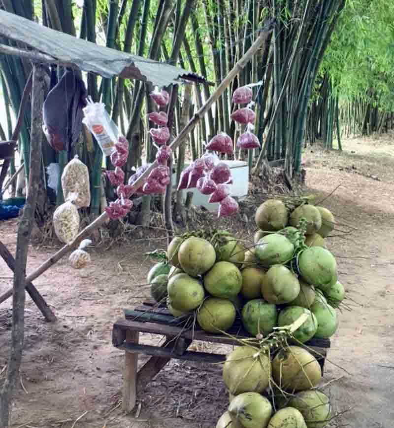 Strassenstand mit frischen Kokosnuessen auf Jamaika