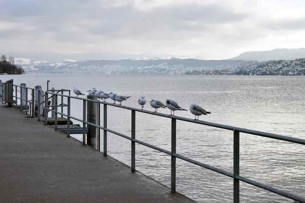 Zürich im Winter Züricher See