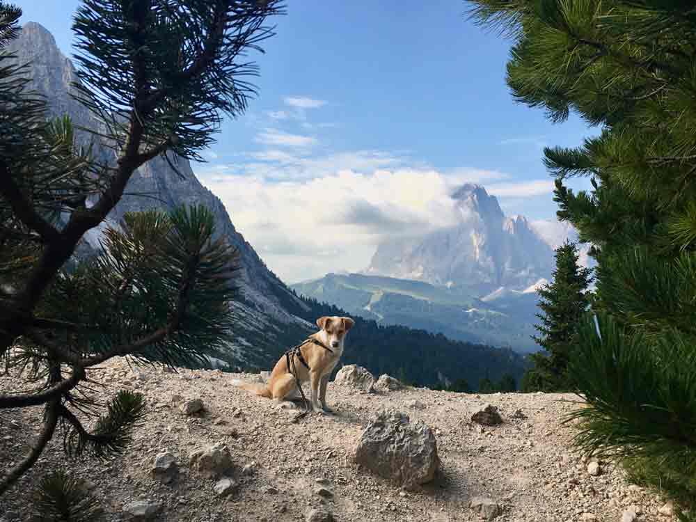 hundeshootig vor Langkofel Dolomiten