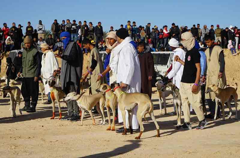 Sahara Festival Douz Jagdhunde Sloughi