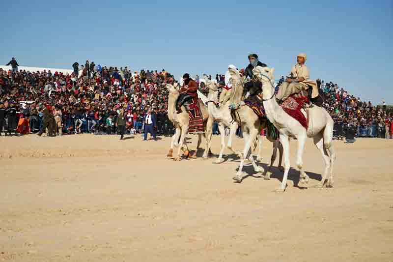Sahara Festival Douz Kamele