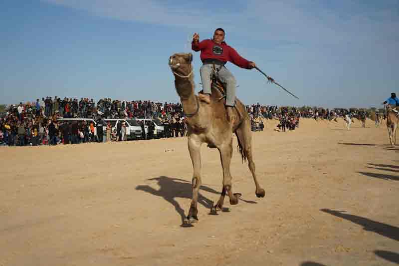Kamelrennen in Tunesien Sahara Festival in Douz