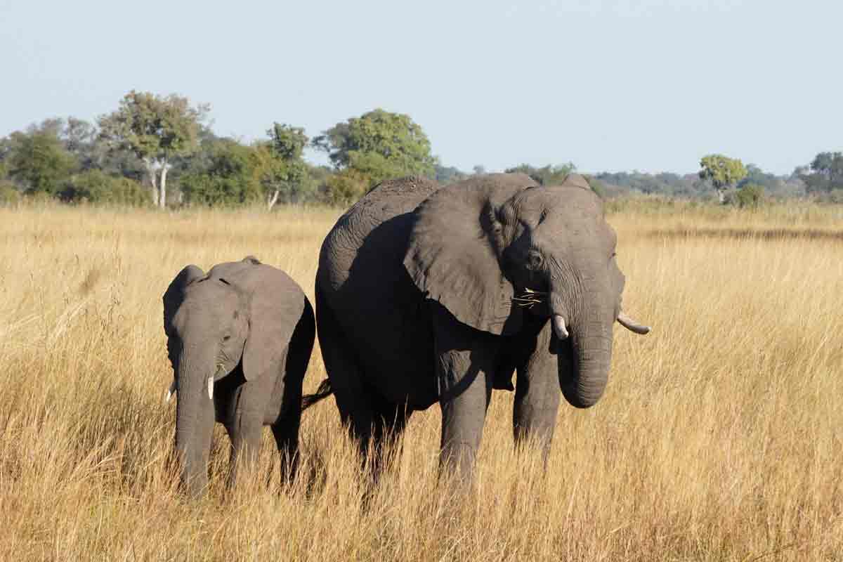 Reise in die Natur von Afrika