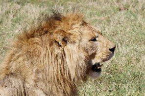 Warum nicht die Reise in die Natur von Afrika planen lassen?